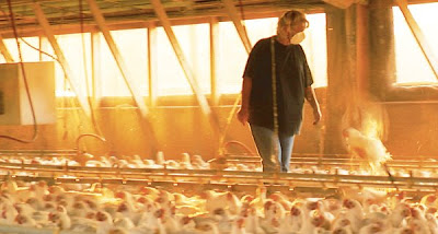 Among the chickens, in Food, Inc.