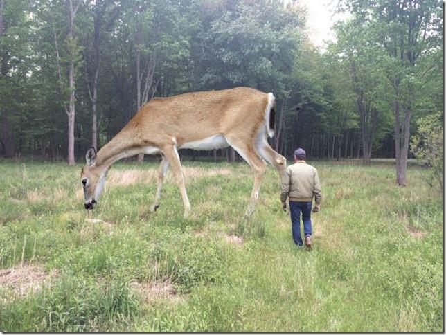 """""""Deer,"""" by Tony Tasset."""