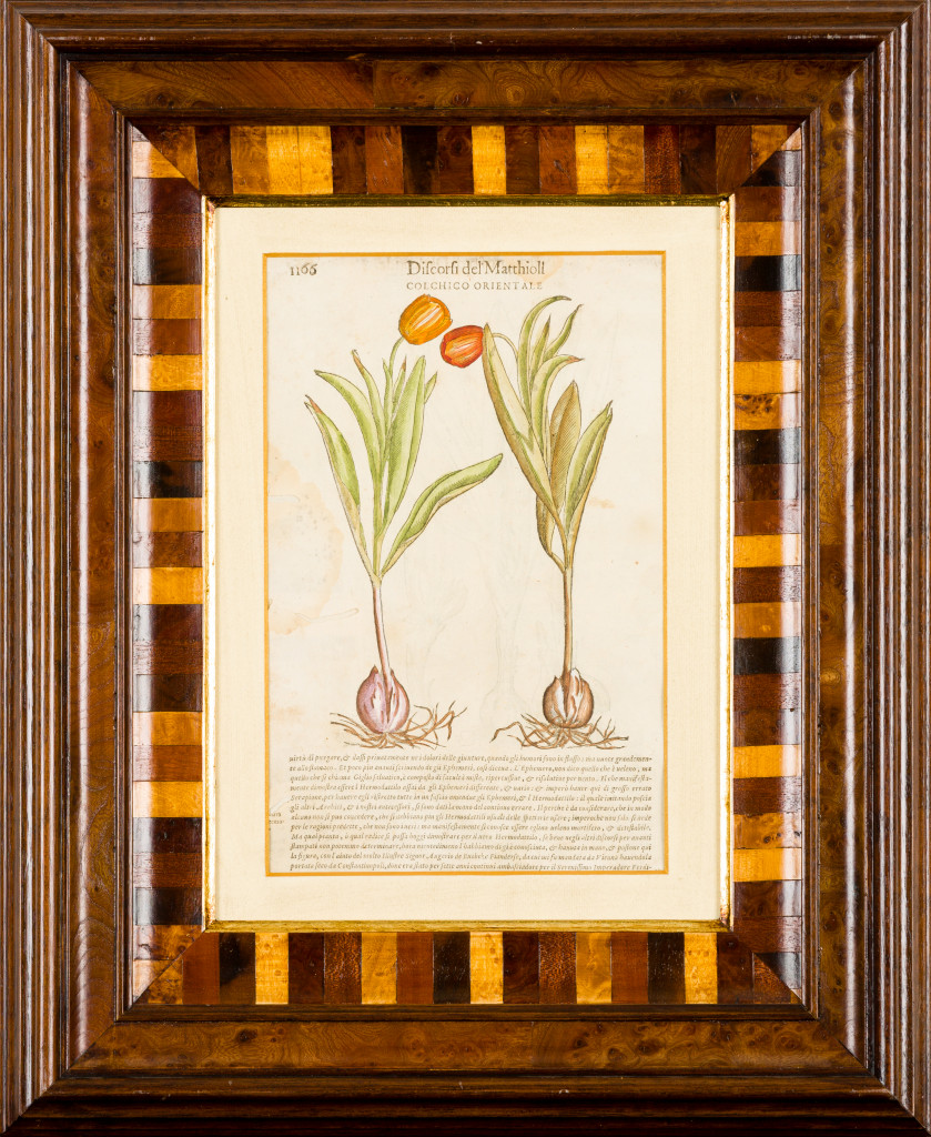 A botanical drawing framed for the Ann Norton Sculpture Gardens exhibit. (Photo by Chris Salata / Capehart)